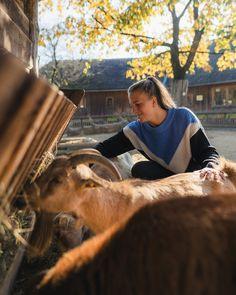 Die beliebtesten Ausflugsziele in der Region Animals, Tourism, Road Trip Destinations, Traveling, Animais, Animales, Animaux, Animal