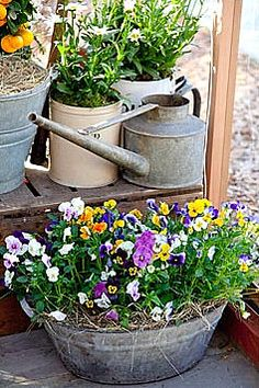 spring flowers and galvanized love in containers and watering cans