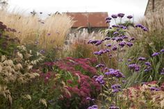 This border garden could be created with ornamental deer grass or Mexican Feather grass and Sedum 'Autumn Joy.'
