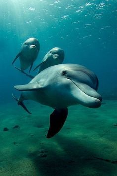 Dolphins - National Geographic Photo Contest