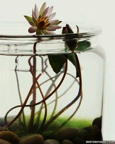Indoor Water Garden • Martha Stewart Living Repinned by www.claudiadeyongdesigns.com