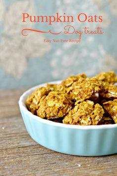 Easy Hypoallergenic Dog Treat Recipe: Pumpkin and Oats Dog Treats - no corn or wheat!
