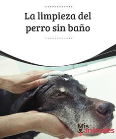 La #limpieza del perro sin baño Todas las mascotas necesitan cumplir con rutinas de #higiene y salubridad inalterables para poder vivir una vida plena y de calidad. Tan importante como los #hábitos alimenticios sanos, la limpieza del #perro no es #asunto menor.