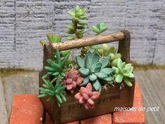 Miniatures: Succulents
