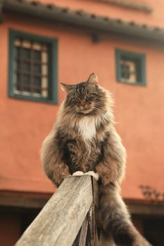 Photo Giant Cat by Mark van Kints on 500px