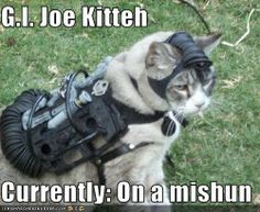 G.I. Joe Kitteh  Currently: On a mishun