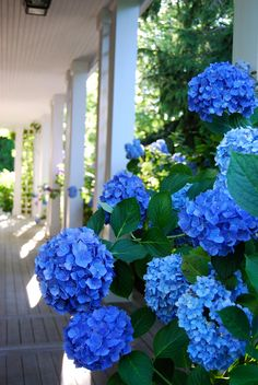 beautiful porch, with blue  hydrangeas,           hampton hostess