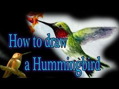 How to draw a Humming Bird - YouTube
