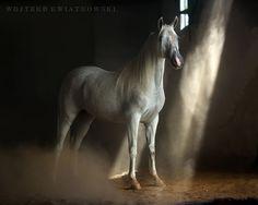 Granger-DSC_9095a-1200a-CR by wojtekkwiatkowski_1282 - Image of the Year Photo Contest 2016