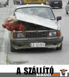 Some of his neighbors suspected Yussef wasn't adhering to Muslim dietary restrictions. With his trunk already full of bacon, he tried to sneak the giant dead pig to his house under the hood. Let It Out, Creepy, Mystery, Weird, Jokes, Lol, Mexico City, Work Hard, Muslim