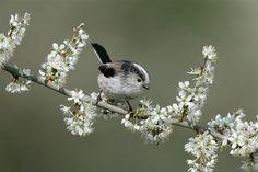 Among the blossom