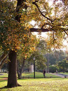 Autumn Afternoon in Buenos Aires | Una Tarde de Otoño en Buenos Aires