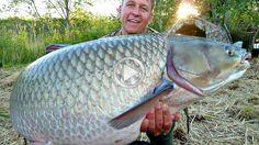 Вот это рыба Жесть Рыбаки в шоке Fishing Videos Прикол на рыбалке Смотре...