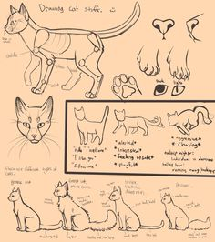 Drawing Cats by *Neko-Maya on deviantART