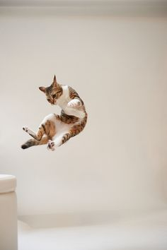 """Cats always land on their feet. Dogs won't even let you throw them."" --Author Unknown  #funnycats  #cutecats"