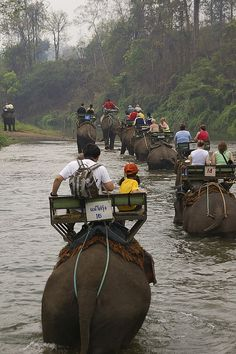 elephant riding, in Chiang mai, Thailand..one day.