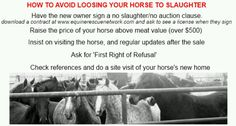 How to avoid sending your horse to slaughter