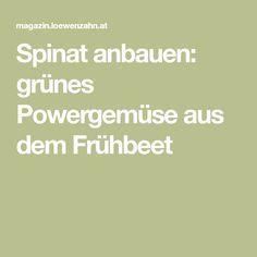 Spinat anbauen: grünes Powergemüse aus dem Frühbeet
