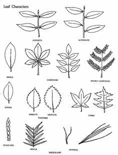 Flower Identification Chart | Plant Identification Guide | Forest ...