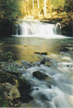 Grundy State Forest Tn