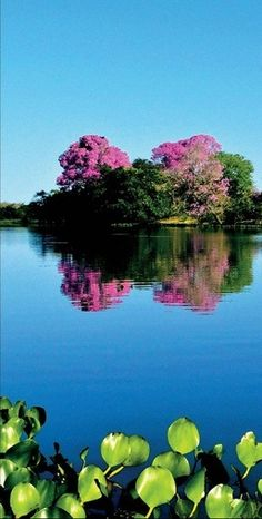 Pantanal - Brazil ✿⊱╮