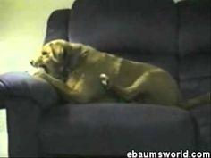 Skizo Dog - YouTube