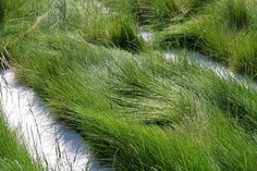 Shades of Green introduced new, sustainable grass seed. The no-mow lawn uses a blend of fescue.
