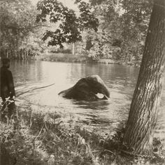 Tsar Nicholas II Swimming   The Romanov family's elephant swimming in one of the Alexander Park ...