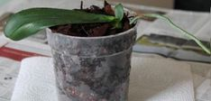 Unique kokedama Ball Ideas for Hanging Garden Plants selber machen ball Terrarium Plants, Garden Plants, Indoor Plants, Orchid Plants, Orchids, Orchid Varieties, Garden Online, Orchid Care, Garden Care