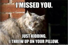 The wrath of cats whose owners leave for a while!!!!!!!!@@@@@@@@@   Dump A Day Funny Pictures Of The Day - 62 Pics