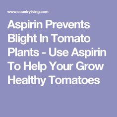 Aspirin Prevents Blight In Tomato Plants - Use Aspirin To Help Your Grow Healthy Tomatoes