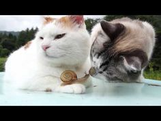 Que se passe-t-il quand un chat a un coup de foudre pour un escargot ? - Insolite - Wamiz