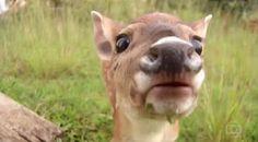 """""""O Grito do Bicho"""": Quase 500 mil animais silvestres são atropelados p..."""