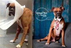 before and after photos of shelter dogs - Shelter & rescue PR