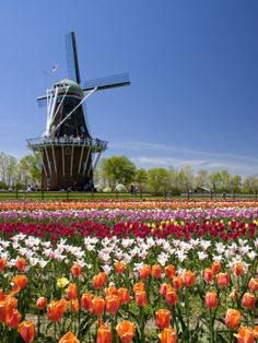 """Holland.  No, this isn't out of place; anyone from the region knows of the heavy Dutch presence in Michigan.  The towns of Holland and Zeeland became more-or-less centers of the settlement in the mid-to-late 1800s.  The windmill here is probably """"De Zwaan,"""" an authentic working Dutch grist windmill."""