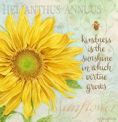 Lang calendar, art by Jane Shasky. js-d225-sunflower