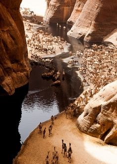 camels by a river. gadmachine