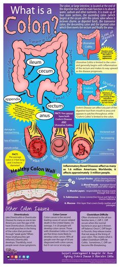 This week's blog post contains an infographic about a very important organ! Colitis Ninja: What is a Colon? #colon #CrohnsDisease #UlcerativeColitis