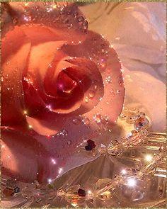 The Beautiful Rose Garden - Secret New Life Beautiful Flowers Pictures, Beautiful Flowers Wallpapers, Beautiful Rose Flowers, Beautiful Gif, Pretty Wallpapers, Flower Pictures, Flowers Gif, All Flowers, Flower Phone Wallpaper