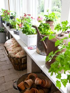 Donkey and the Carrot: A lovely greenhouse! Make the observed small room a greenhouse! - All For Garden Edible Garden, Garden Pots, Dream Garden, Home And Garden, Metal Watering Can, Watering Cans, Greenhouse Shed, Potting Tables, Greenhouse Interiors