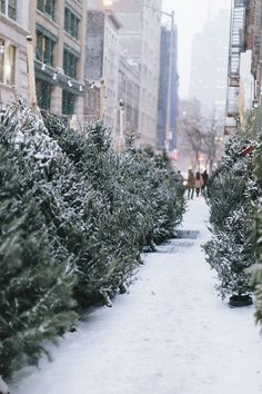 | December | The scent of pine and twinkle of snowflakes on blue-green boughs . . .