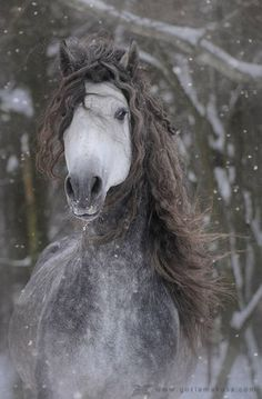 horses make me cold!!!!!!  snow horse!