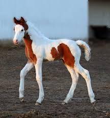 What a pretty foal!
