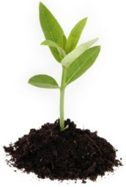 SAVE MONEY MAKING YOUR OWN ORGANIC SOIL...How To Sterilize Soil & Organic Potting Mix Recipes