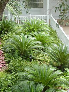 Palm Trees Landscaping, Stone Landscaping, Tropical Landscaping, Backyard Landscaping, Landscaping Ideas, Florida Landscaping, Florida Gardening, Backyard Ideas, Palm Garden