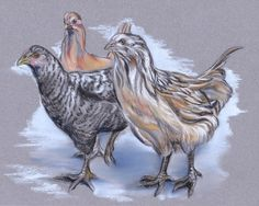 Trio of Young Chickens by M.M. Anderson Designs