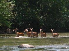 Coosawattee River Resort Ellijay Georgia - Bing Images