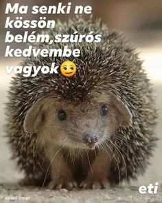 Good Day, Haha, Jokes, Beer, Funny, Cute, Pictures, Animals, Hedgehogs