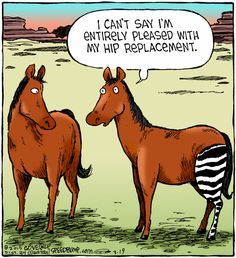 I Can't Say I'm Entirely Pleased With My Hip Replacement - Funny Memes. The Funniest Memes worldwide for Birthdays, School, Cats, and Dank Memes - Meme Funny Cartoons, Funny Memes, Jokes, Ot Memes, Medical Humor, Nurse Humor, Funny Horses, Funny Animals, Horse Meme