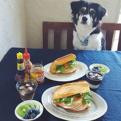 . ひとつ前のpic、朝ごはん風景の舞台裏。 . 毎朝一緒にごはんタイムを過ごすのが好きなレイール🐶さん♡ . . #ilovemydog #doglover…